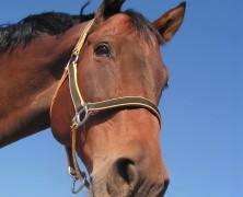 Glæden ved at have en hest